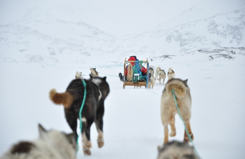 Dogsledding in Greenland